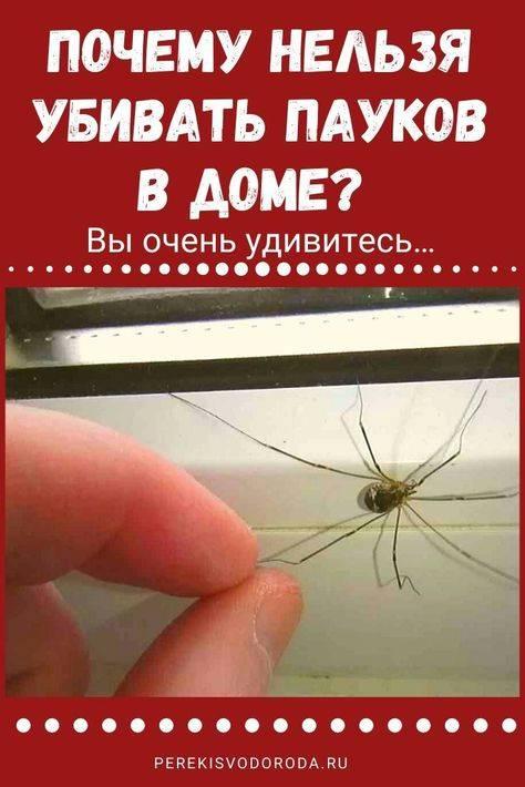 Почему нельзя убивать паука