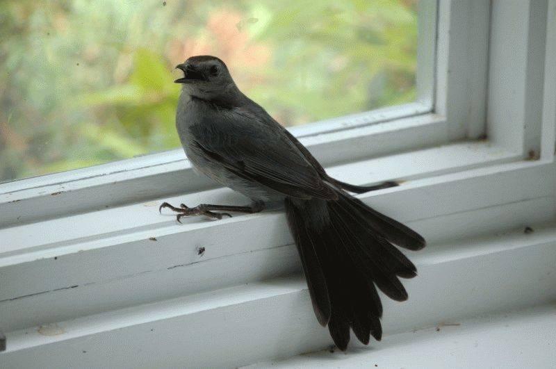Приметы о ласточках: что значит по народным поверьям, если птицы залетели в дом и стоит ли этого бояться?