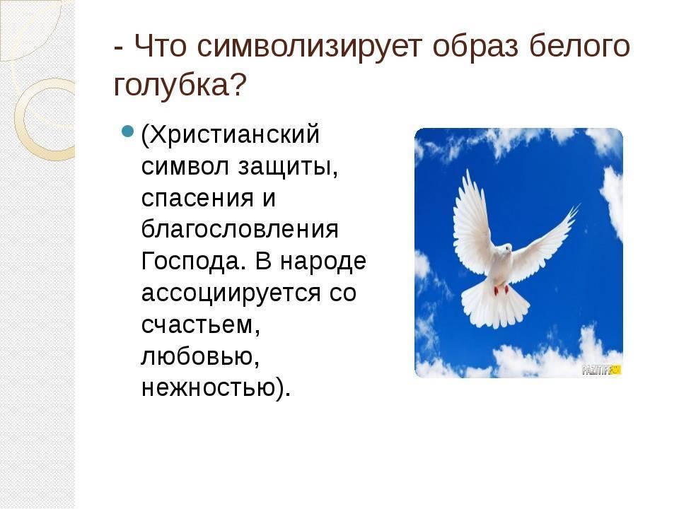 Голуби как символы -  doves as symbols
