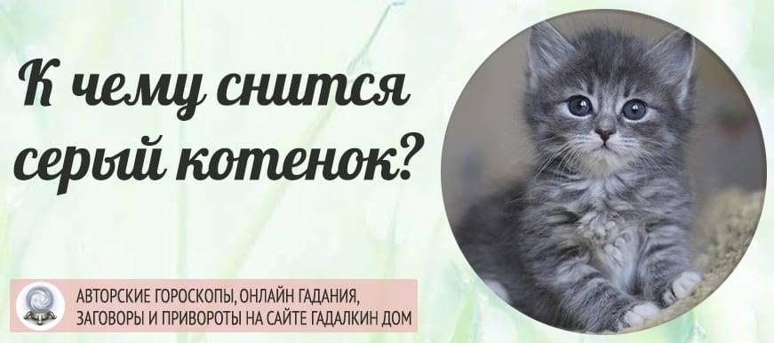 К чему снятся котята?