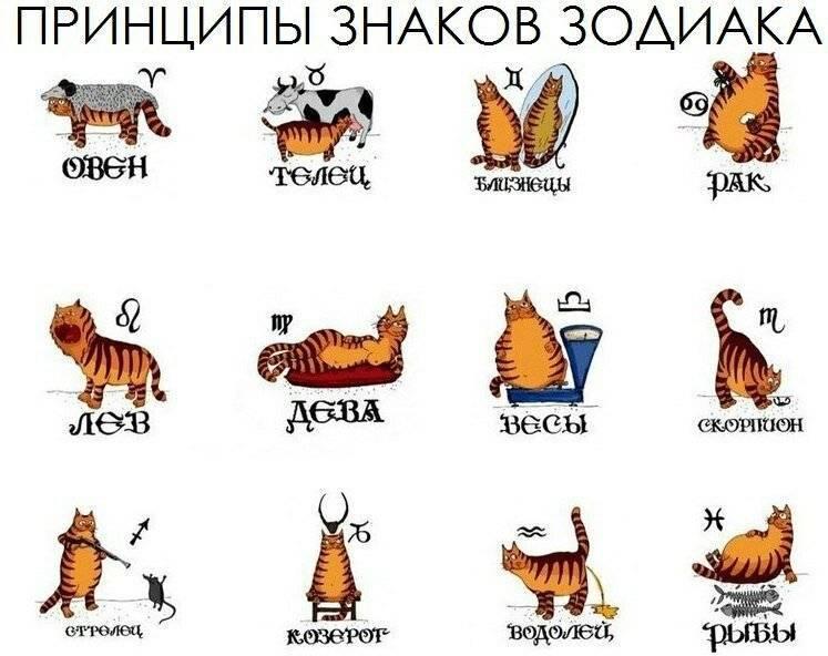 Самые темные секреты знаков зодиака, о которых они не рассказывают :: инфониак