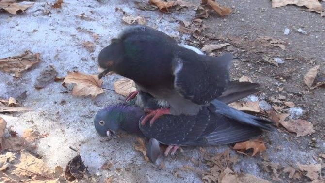 Сонник найти мертвую птицу. к чему снится найти мертвую птицу видеть во сне - сонник дома солнца
