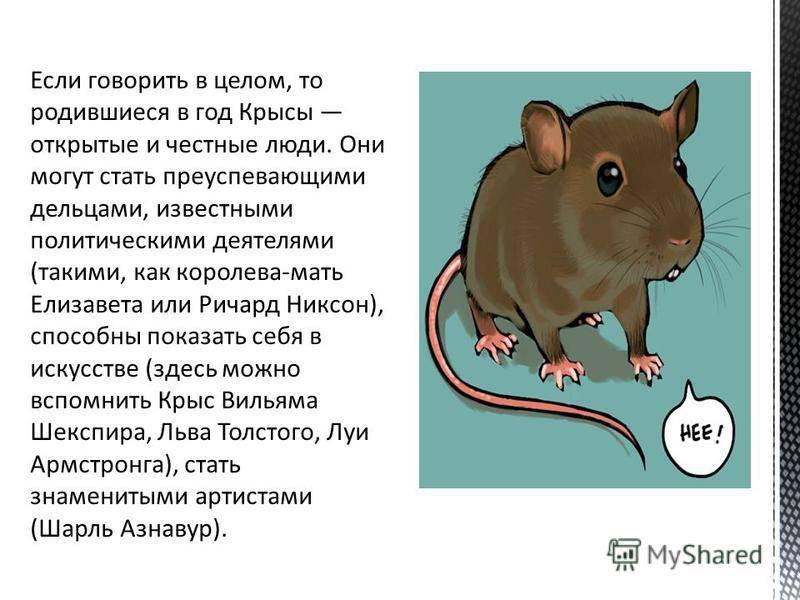 Год крысы - характеристика женщина и мужчина крыса