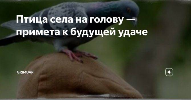 Птичка села на голову народная примета