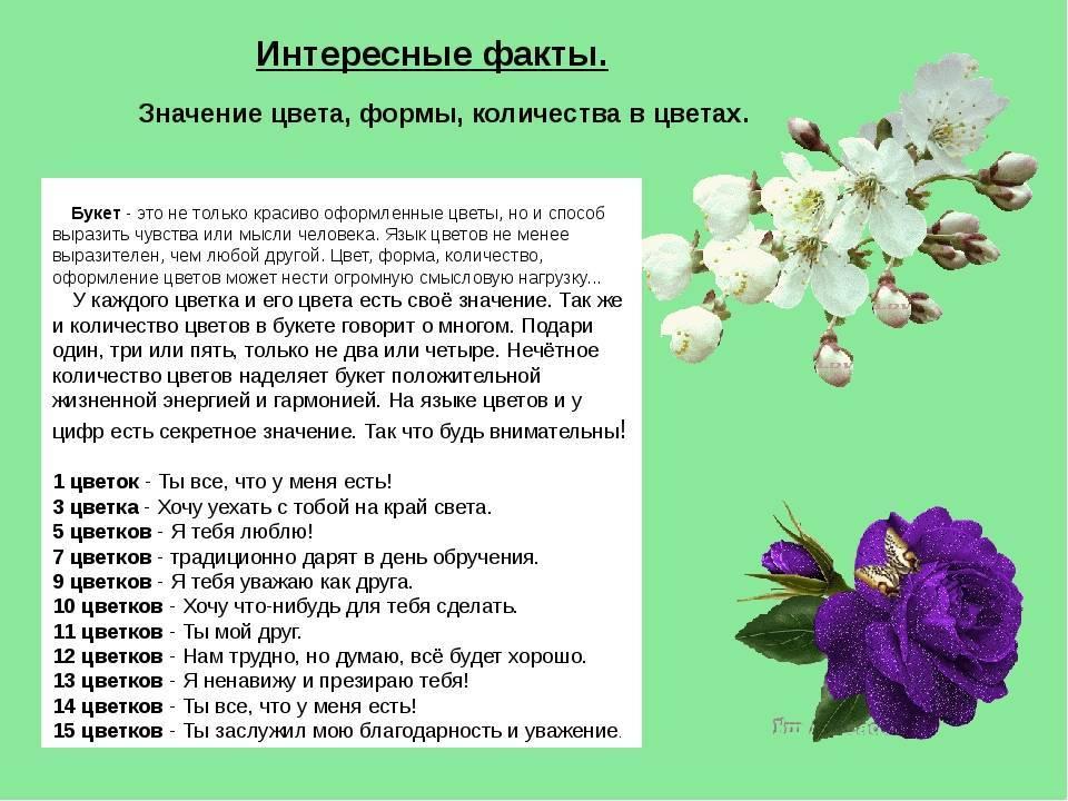 Цвета роз: значение и символика. когда и кому дарить белые, красные, желтые розы - sadovnikam.ru