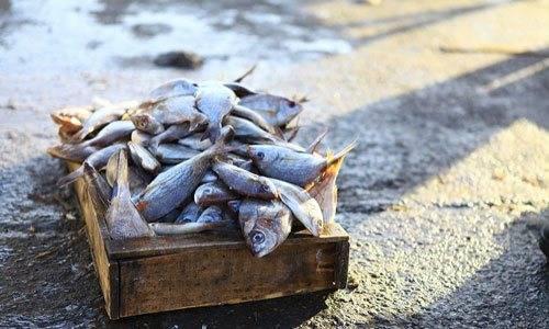 Сонник к чему снится замороженная рыба
