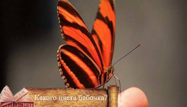 Бабочка залетела в дом: примета хорошая или плохая? :: syl.ru