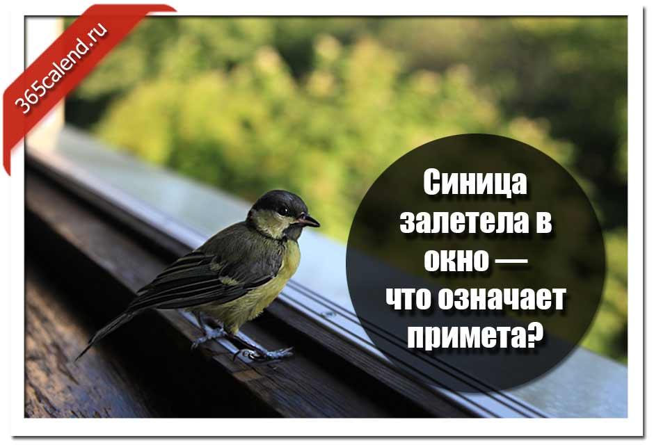 Птица залетела в окно - народные приметы и суеверия