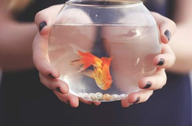 Гадание на желание – 8 онлайн гаданий | гороскопы 365