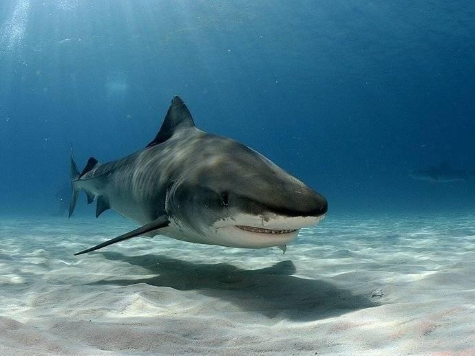 К чему снится акула в воде женщине или мужчине - толкование сна по сонникам