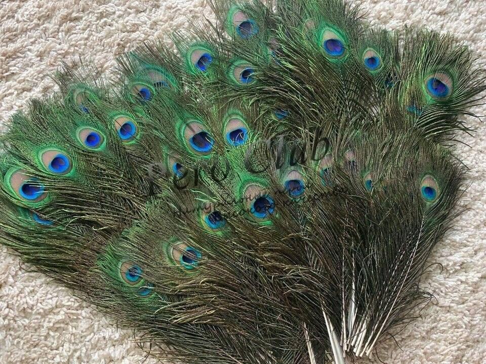 Павлин как талисман в фен шуй и что он означает, для чего павлиньи перья в доме?