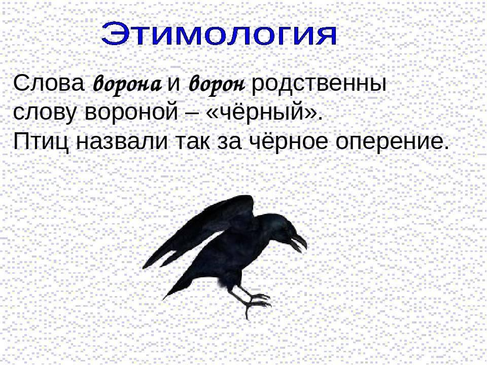 Залетела птица в окно: к чему это и что делать