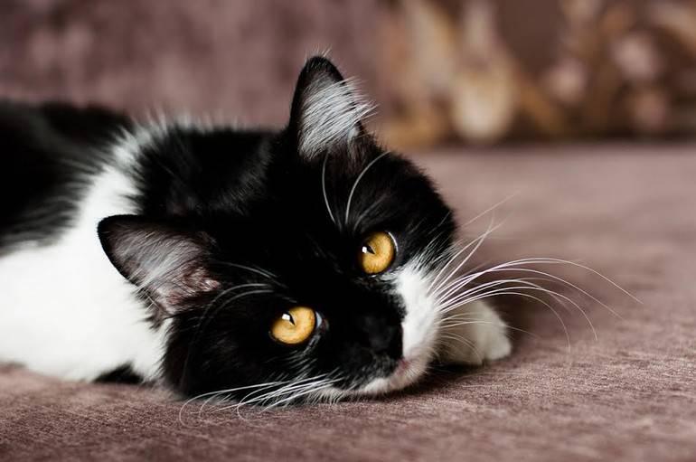 К чему снится черная кошка по соннику? видеть во сне черную кошку – толкование снов.