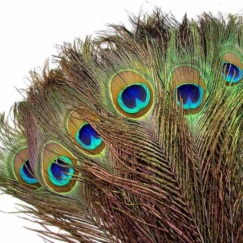 К чему примета найти перо птицы дома или на дороге - женская жизньженская жизнь