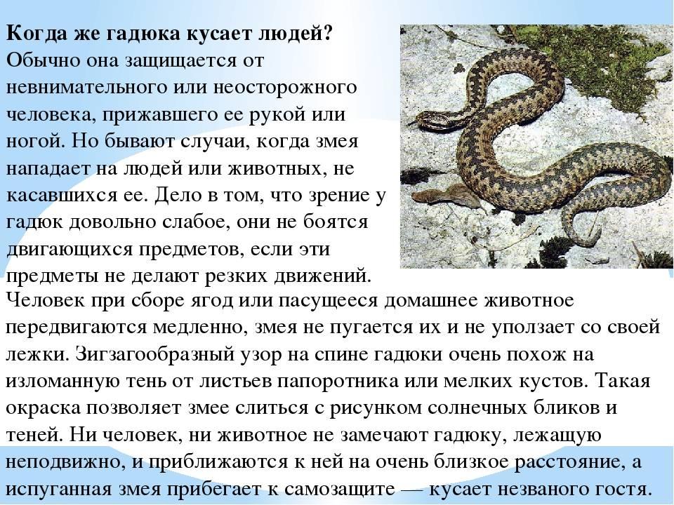 Сонник укусила змея и ее выкинула от себя. к чему снится укусила змея и ее выкинула от себя видеть во сне - сонник дома солнца