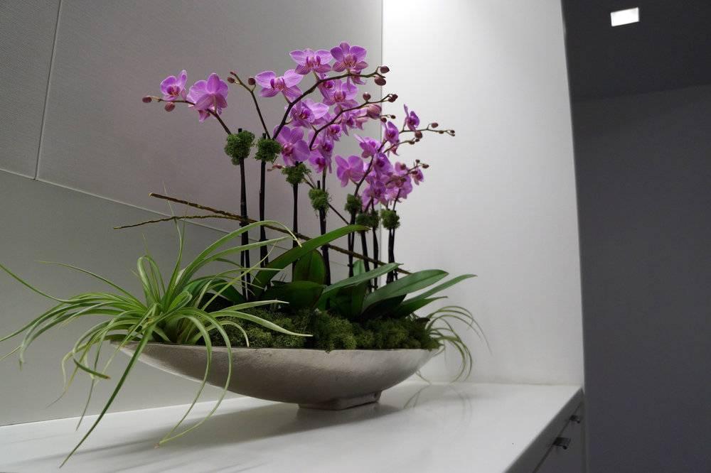Народные приметы об орхидее: почему нельзя держать дома, к чему зацвела