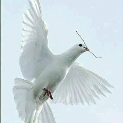 Сонник белый голубь сел на руку. к чему снится белый голубь сел на руку видеть во сне - сонник дома солнца