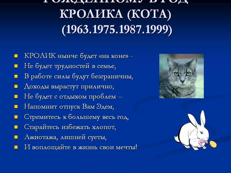 Мужчина кролик: характеристика года рождения   pro-everyday.ru