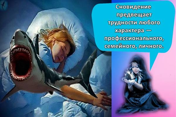К чему снится акула во сне женщине и мужчине
