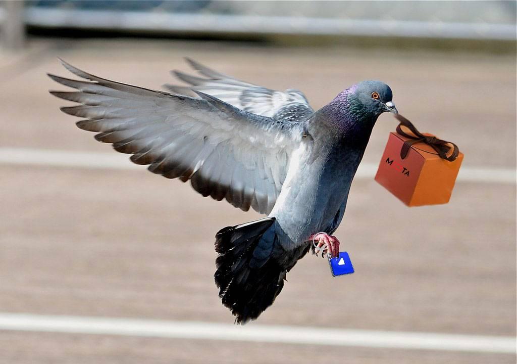Птица села на голову - к чему примета и что она означает