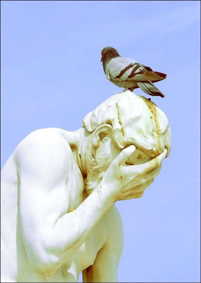 Птица накакала на голову, машину, одежду - примета хорошая