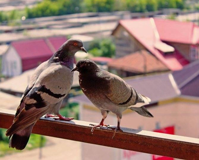 К чему птицы вьют гнездо на балконе