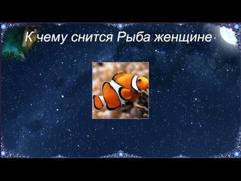 К чему снится женщине рыба — 40 подробных значений