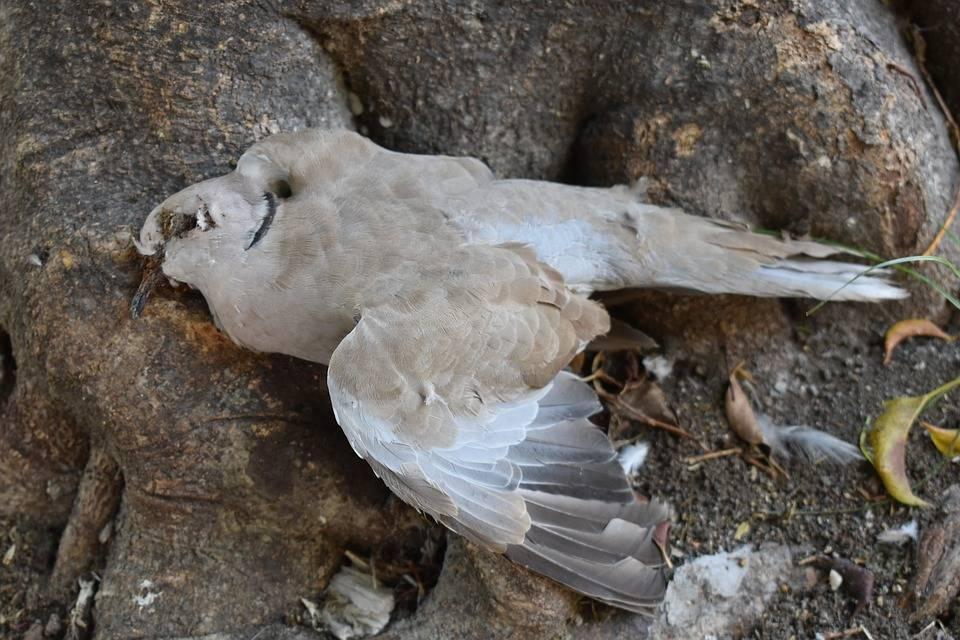 Сонник убитая птица. к чему снится убитая птица видеть во сне - сонник дома солнца
