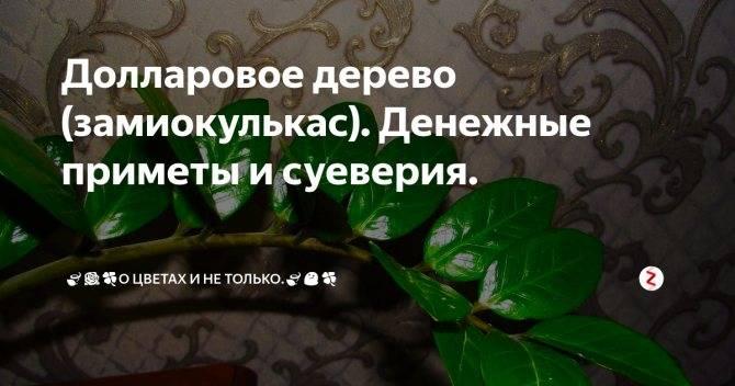 Кактусы: выбираем по цветам  на supersadovnik.ru