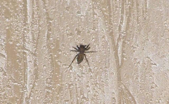 Паук ползет вверх по стене. приметы про пауков — хорошие и плохие