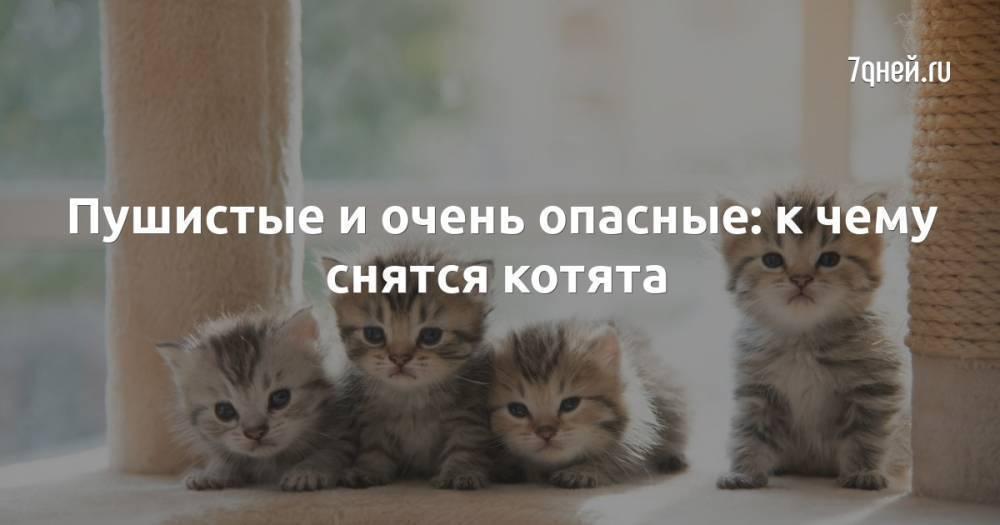 Что означает сон про серую кошку — 37 толкований по разным сонникам