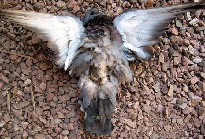 Сонник падают мертвые птицы. к чему снится падают мертвые птицы видеть во сне - сонник дома солнца