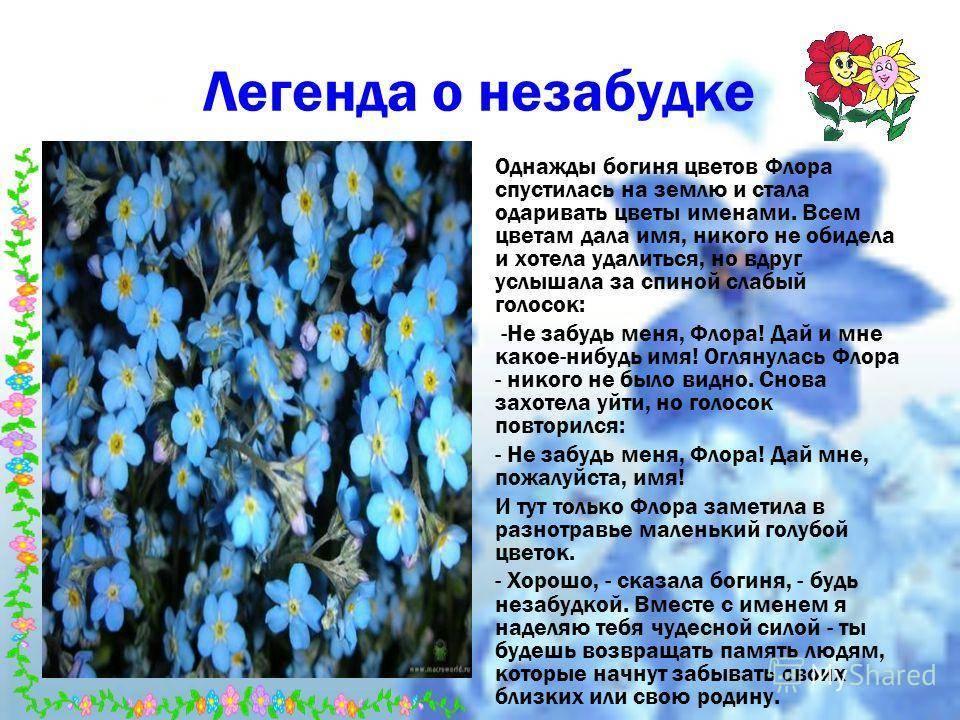 Легенды о цветах для детей, 2 класс