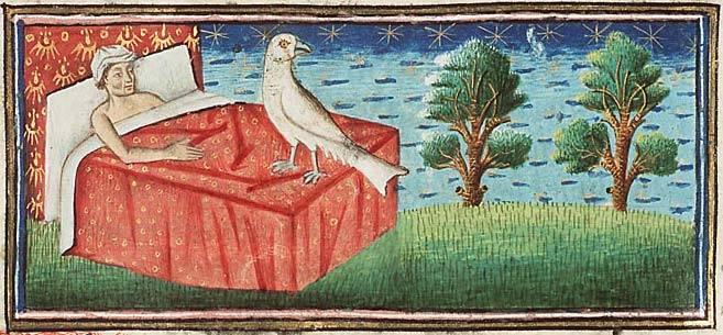 Волшебные птицы: виды и описание