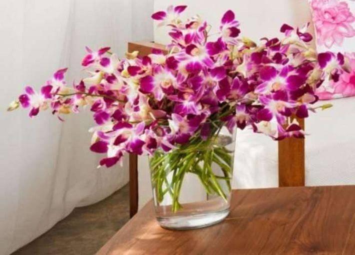 Цветок орхидея: народные приметы и суеверия для дома - можно ли держать в доме орхидею фаленопсис?