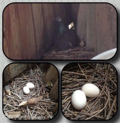 Птицы свили гнездо на балконе: примета по месту и виду птицы