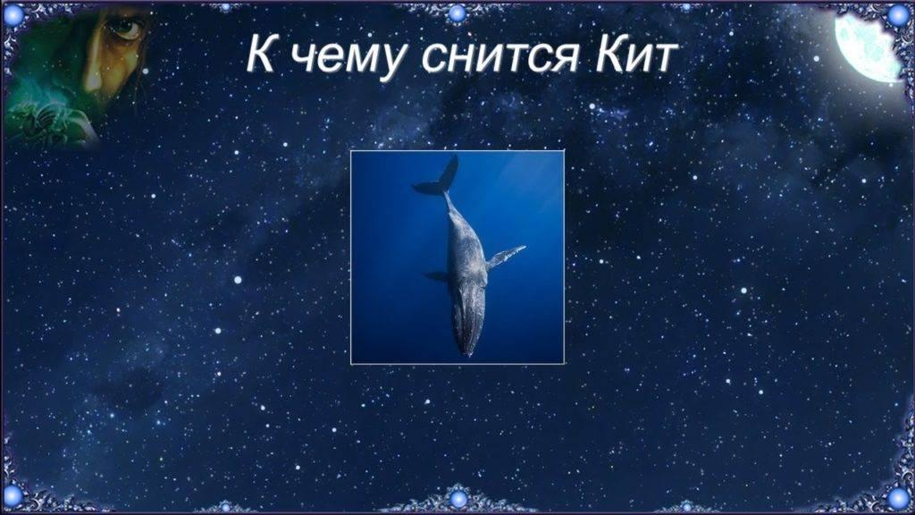 Сонник кит к чему снится во сне? видеть кит что означает?