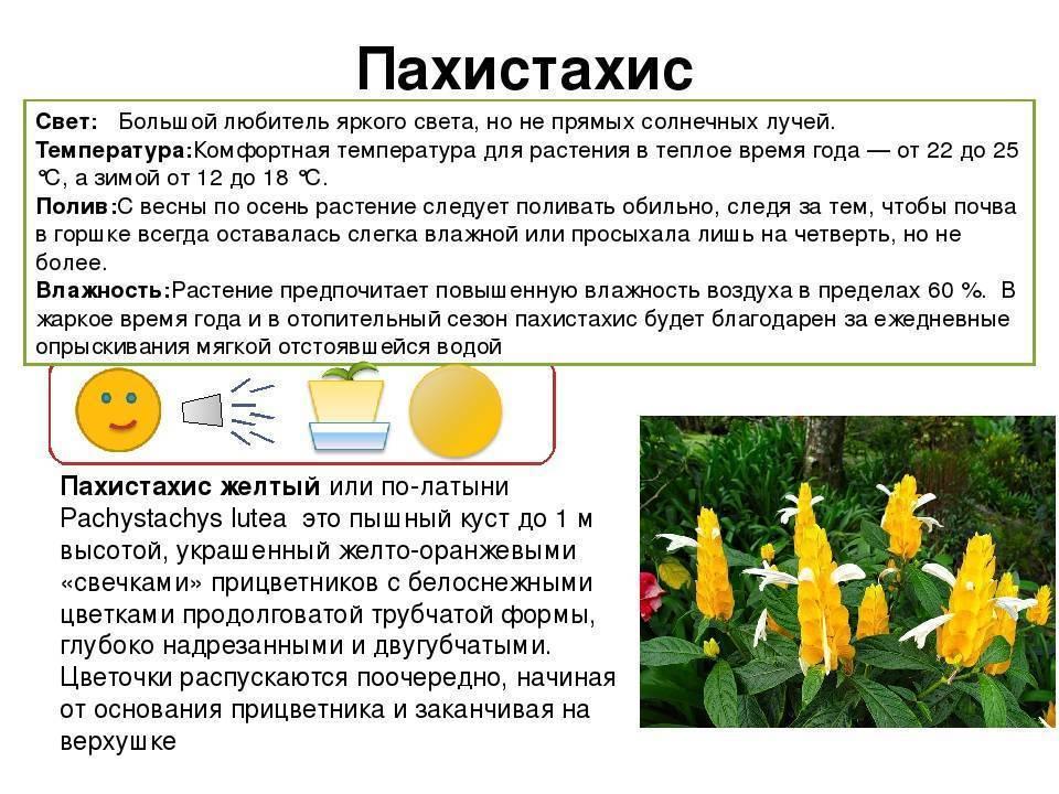 Выбор кактуса для дома