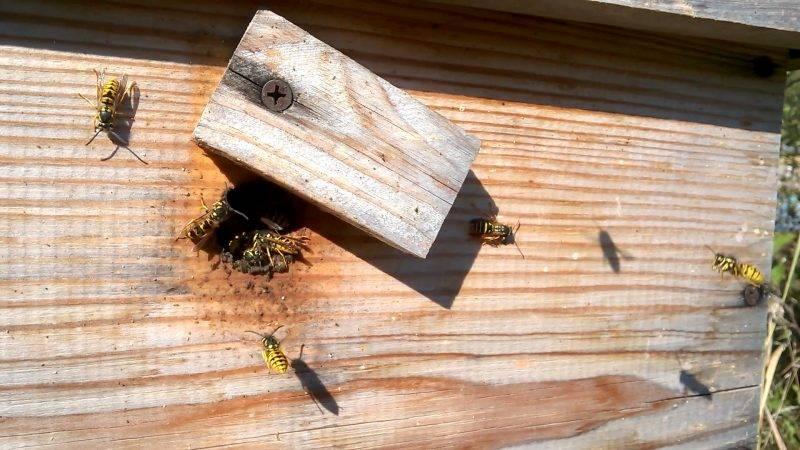 К чему снятся осы, толкование сна по соннику