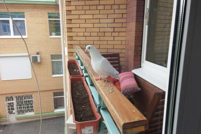 Гнездо на балконе: примета