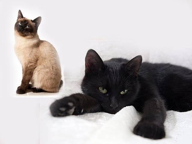 Сонник черный кот и котята. к чему снится черный кот и котята видеть во сне - сонник дома солнца