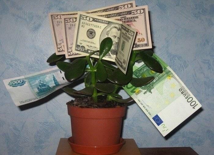 6 комнатных растений, которые приносят удачу