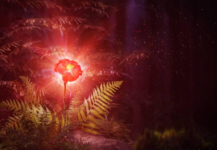 В поисках счастья на ивана купала: цветок папоротника