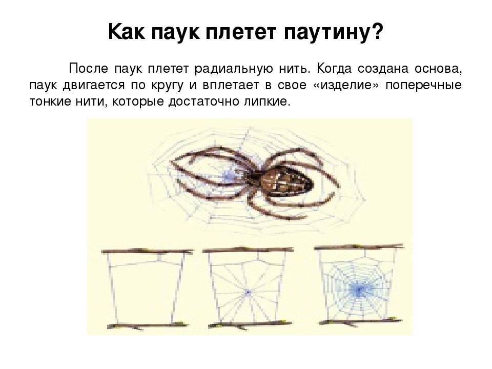 Приметы о пауках: что произойдет, если с потолка спустится паук перед лицом человека