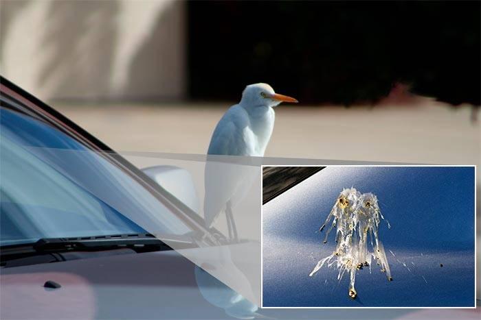 Примета: птица накакала на голову, руку, плечо, одежду, автомобиль, окно