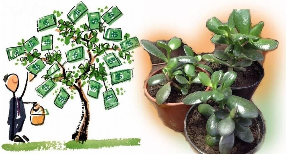 Какие комнатные цветы приносят в дом счастье и благополучие и что посадить для привлечения денежной удачи, а также народные приметы и фен шуй