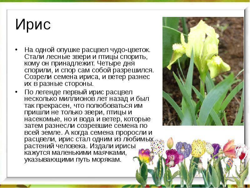 Легенды о цветах: короткие мифы о популярных растениях