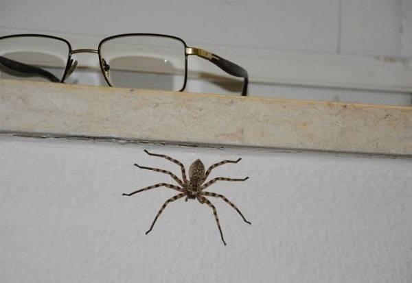 Приметы про пауков в доме, на кухне, в ванной. почему в доме много пауков: примета