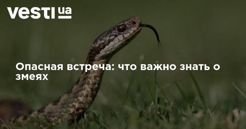 К чему снится, что змея укусила за руку, палец, кисть