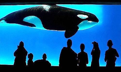 Сонник. кит – все толкования